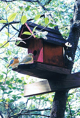Bluebirds and Birdhouse