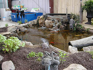 Fish Pond in store